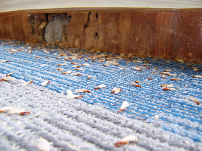 Termites Will Eat Away At Your Wood and Your Wallet