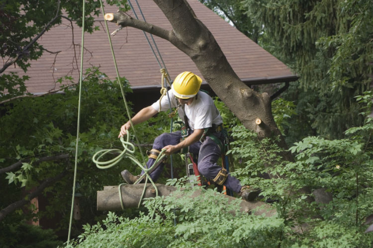 Let Your Tree Care Professional Remove Your Trees